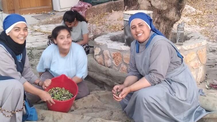 قطف الزيتون والليمون في عنجرة – الأردن